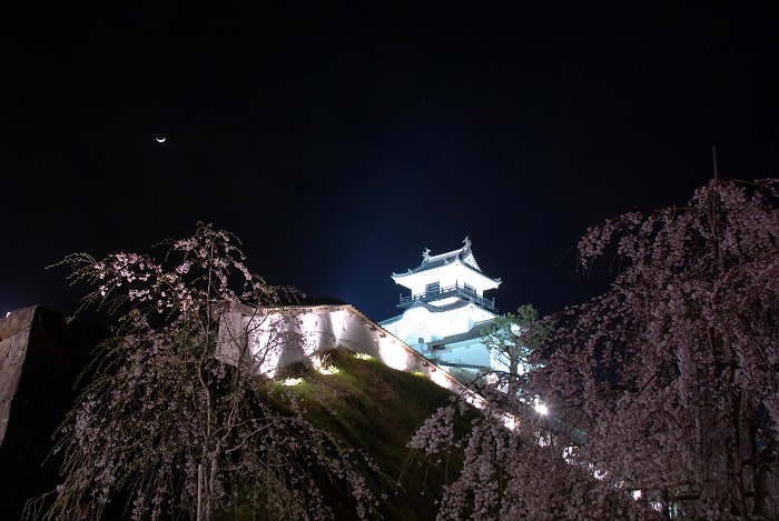 掛川城の夜桜