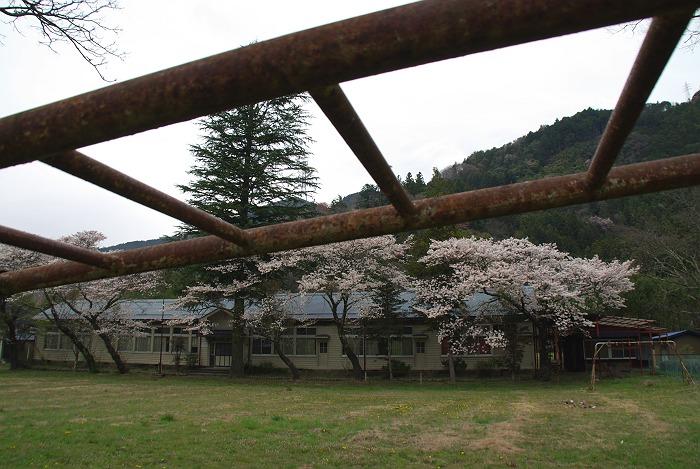 桜 2009 その3