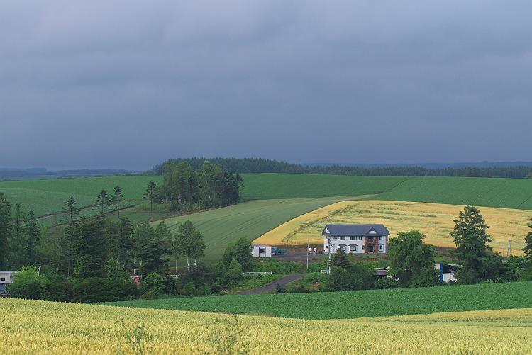 美瑛の丘風景