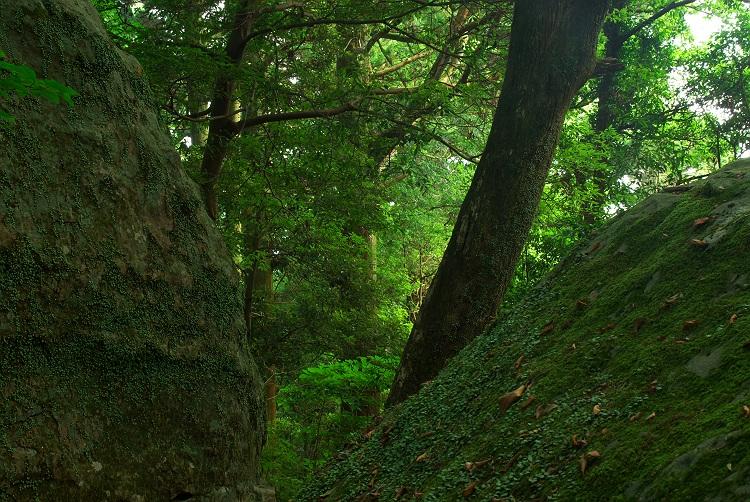 巨岩と樹のある風景