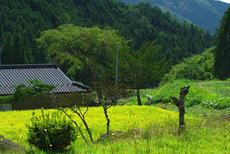茶臼山 2