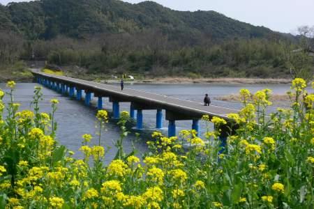 佐田の沈下橋 - 菜の花