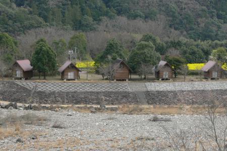 四万十川三島キャンプ場- 菜の花
