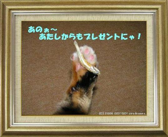 ねこ 猫 肉球祭り 06番