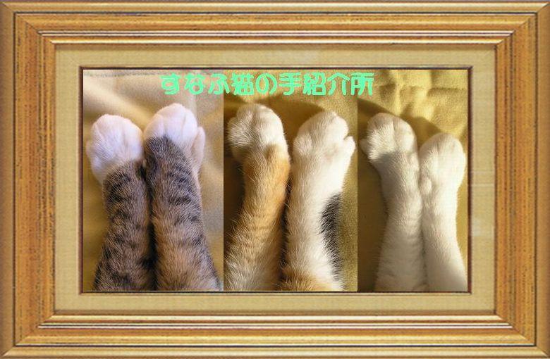 ねこ 猫 猫の手祭り 15番