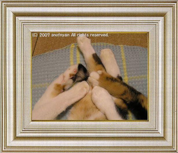 ねこ 猫 手束祭り 09番