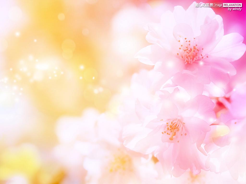 春よ 来い 壁紙 花編